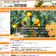 天草おいしいみかん・晩柑・国産レモンのお取り寄せ【田尻農園】