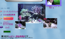 熱帯魚のリース・メンテナンスのことなら【アクアプランニング エス】